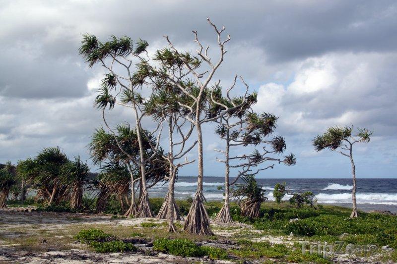 Fotka, Foto Palmy na pobřeží ostrova Efate (Vanuatu)