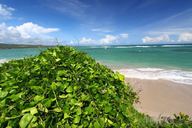 Fotka, Foto Pláž Anse de Sables (Svatá Lucie)