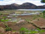 Pohled na rýžová pole
