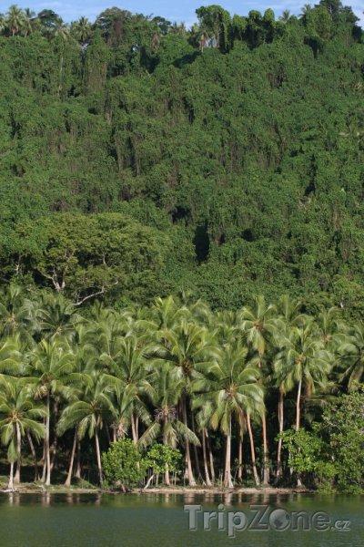 Fotka, Foto Prales na ostrově Malakula (Vanuatu)
