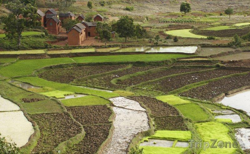 Fotka, Foto Rýžová pole (Madagaskar)