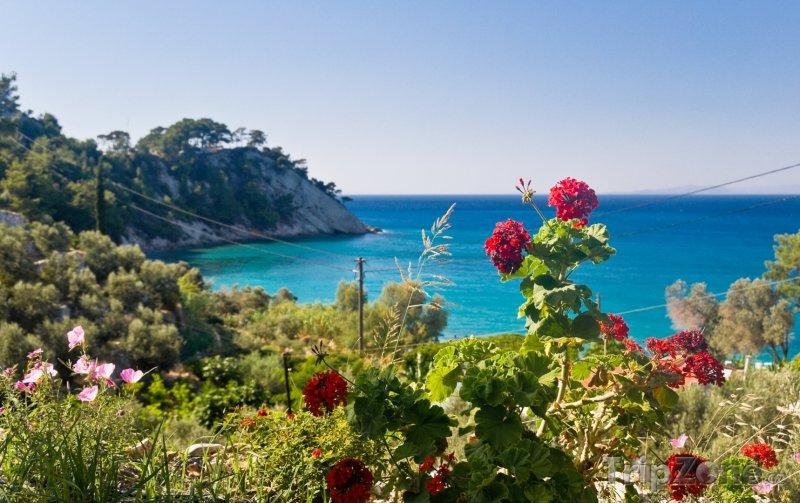 Fotka, Foto Samos, květiny na útesu (Řecko)