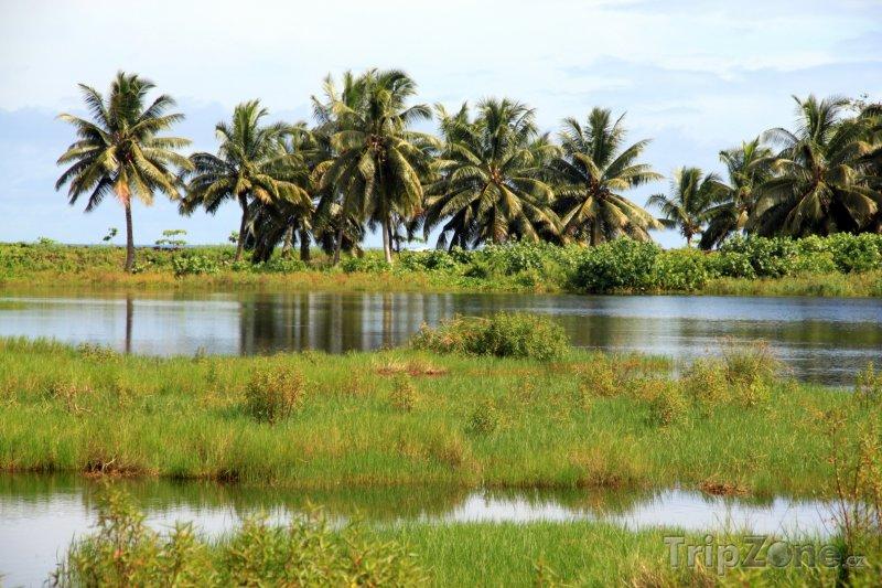 Fotka, Foto Savaii, močál a palmy (Samoa)