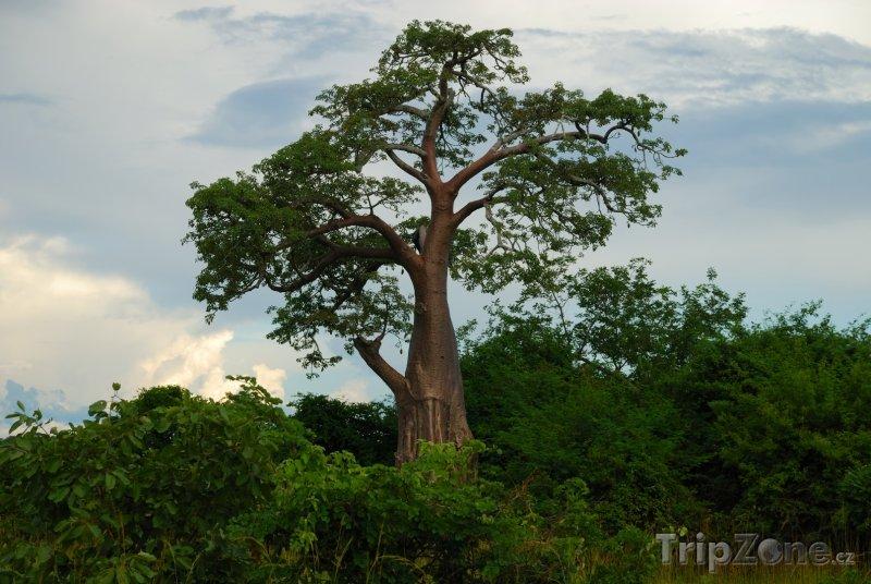 Fotka, Foto Strom v národním parku Kafue (Zambie)