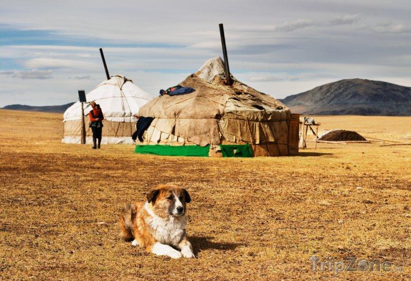 Fotka, Foto Tradiční mongolské jurty (Mongolsko)