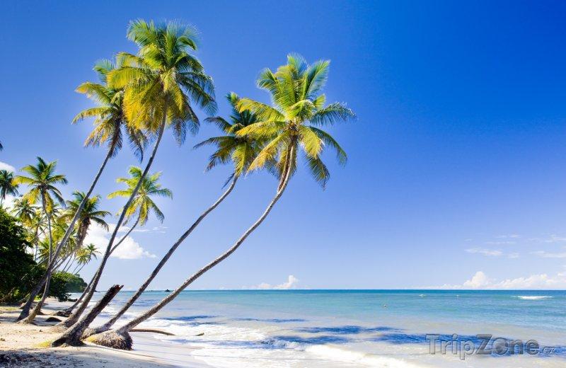 Fotka, Foto Trinidad, palmy na pláži (Trinidad a Tobago)