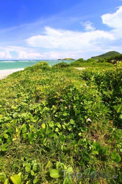 Fotka, Foto Vegetace u pláže Anse de Sables (Svatá Lucie)