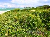 Vegetace u pláže Anse de Sables