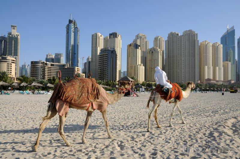 Fotka, Foto Velbloudi na dubajské pláži (Spojené arabské emiráty)