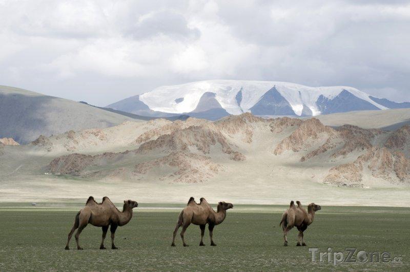 Fotka, Foto Velbloudi na poušti (Mongolsko)
