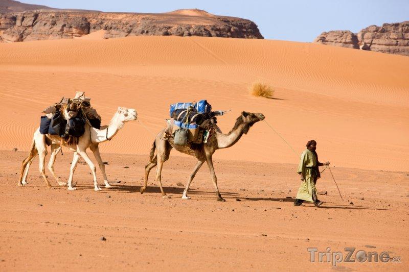 Fotka, Foto Velbloudi v libyjské poušti (Libye)