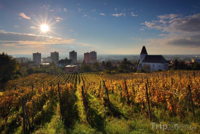 Fotka, Foto Vinice na okraji Bratsilavy (Slovensko)