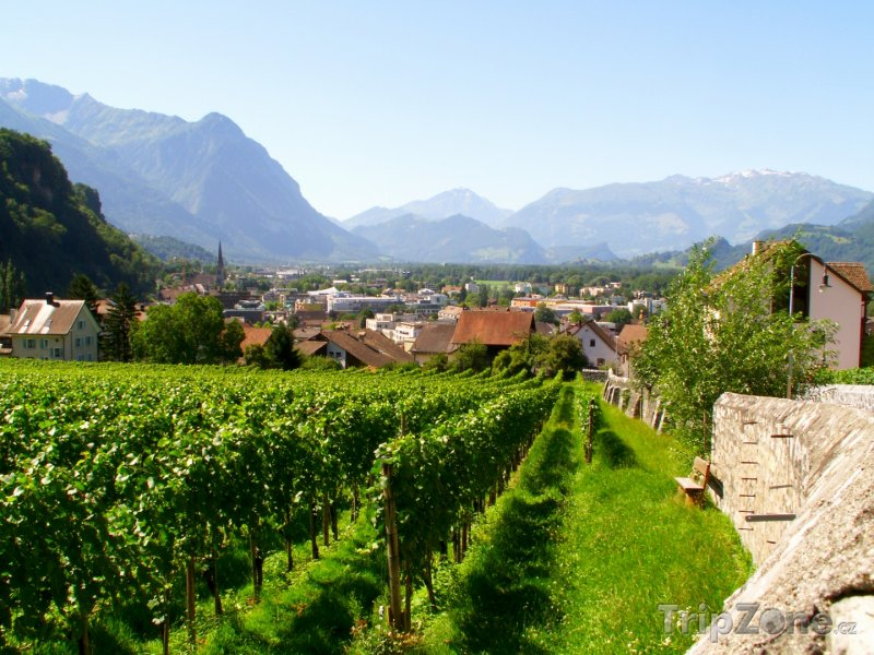 Fotka, Foto Vinice u města Vaduz (Lichtenštejnsko)