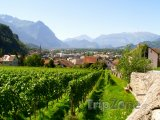 Vinice u města Vaduz