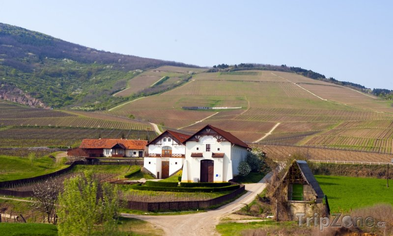 Fotka, Foto Vinice ve městě Tokaj-Hetszolo (Maďarsko)