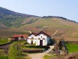 Vinice ve městě Tokaj-Hetszolo