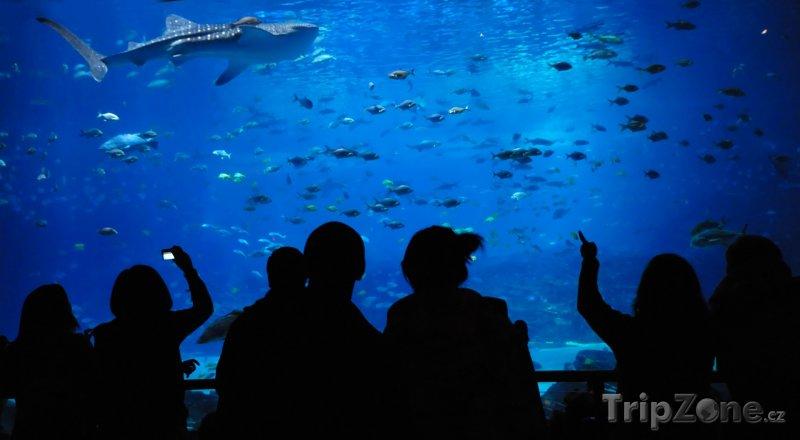Fotka, Foto Georgia Aquarium, největší akvárium na světě (Atlanta, USA)