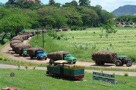 Labasa, náklad směřující do cukrovaru