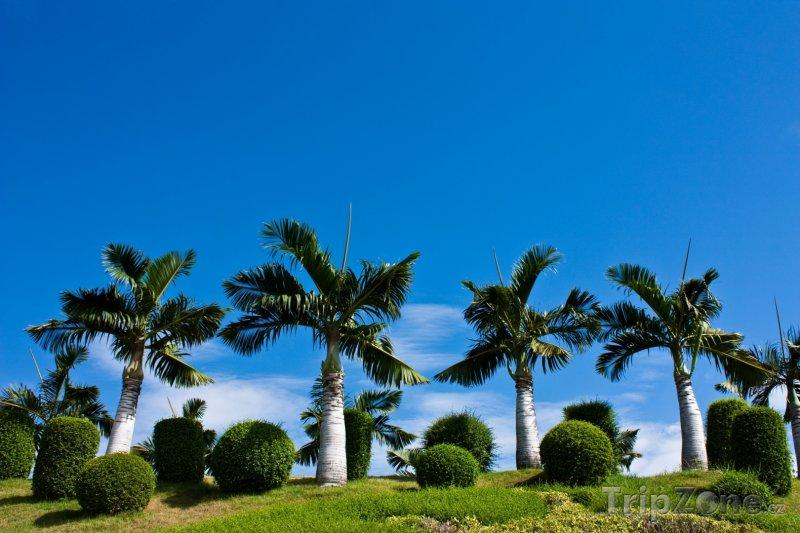 Fotka, Foto Palmy v parku Suan Buak Haad (Chiang Mai, Thajsko)
