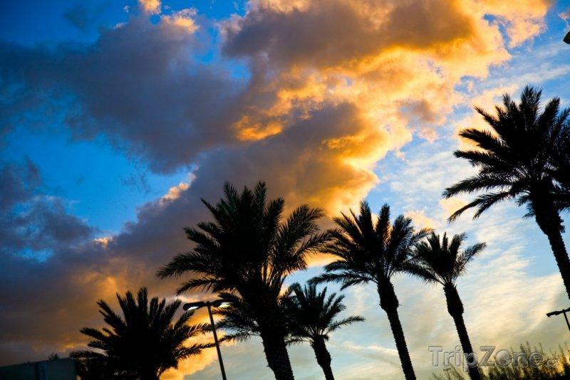 Fotka, Foto Pohled na palmy a oblohu při západu slunce (Miami, USA)