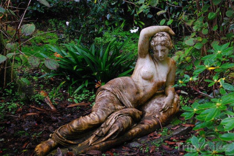 Fotka, Foto Socha v Eden Garden (Auckland, Nový Zéland)