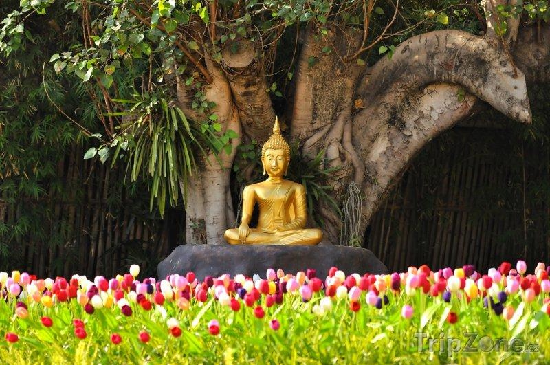 Fotka, Foto Zlatý buddha pod Stromem osvícení (Chiang Mai, Thajsko)