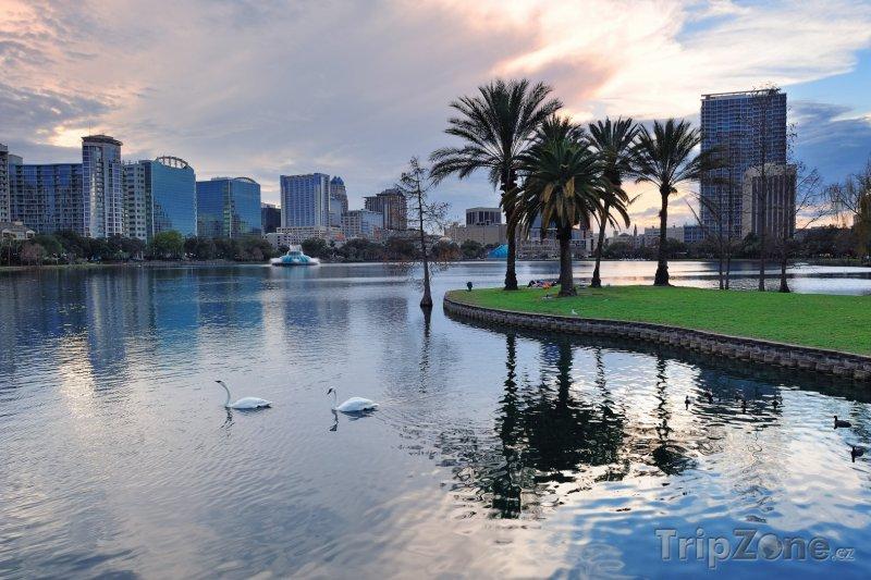 Fotka, Foto Labutě na jezeru Eola (Orlando, USA)