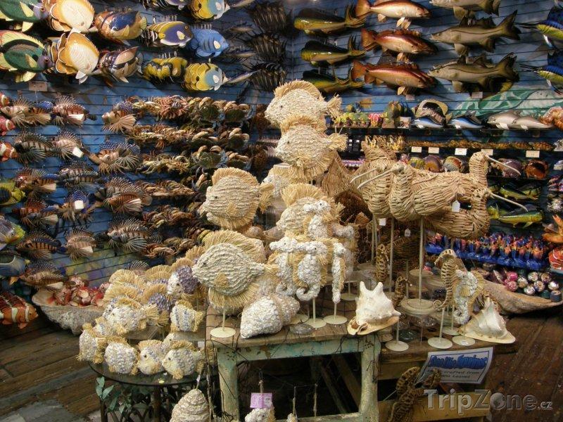 Fotka, Foto Prodejna mořských suvenýrů (Key West, USA)