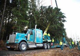 Letošní strom pochází z městyse Pecka, foto: facebook.com
