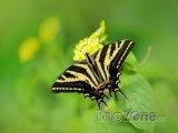 Motýli ve skleníku Fata Morgana, foto: Ondřej Prosický