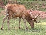 Obora jelena evropského má rozlohu 9 hektarů