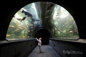 Obří akvárium, foto: obriakvarium.cz