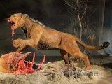 Výstava Giganti - Jeskynní lev, foto: giganti.cz