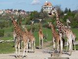 Zoo Praha vystupuje do své 86. sezony