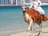 Dubaj, velbloud na pláži Jumeirah