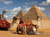 Gíza, velbloudi a pyramidy