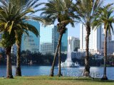 Orlando, palmy na břehu Lake Eola