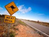 Pozor na klokany!