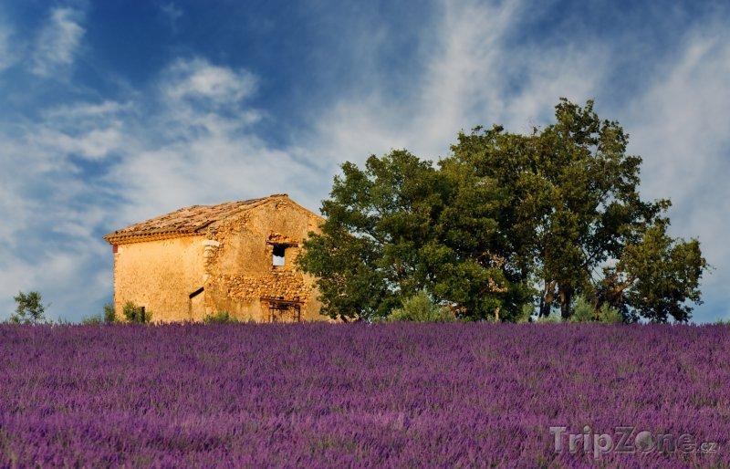 Fotka, Foto Provence, levandulové pole (Francie)