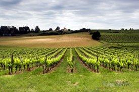 Vinice v okolí Bordeaux