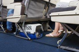 Zvíře na palubě letadla
