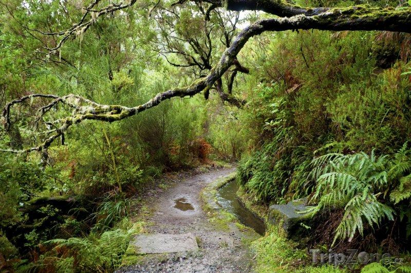 Fotka, Foto Flora na Madeiře (Madeira, Portugalsko)