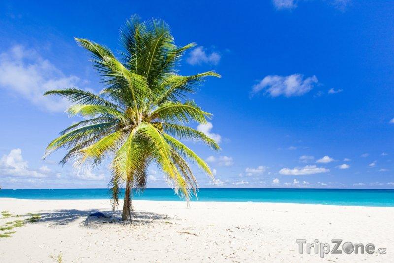 Fotka, Foto Foul Bay, oblast Saint Philip (Barbados)