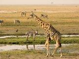 Národní park Chobe v oblasti Ngamiland