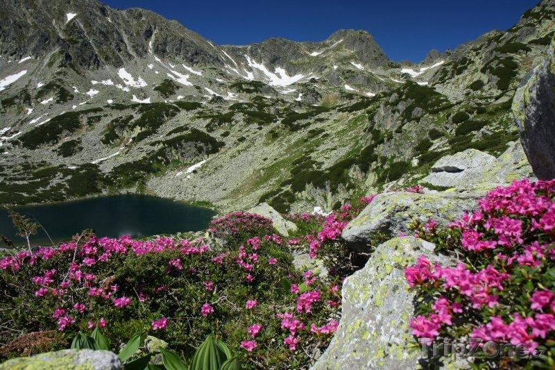 Fotka, Foto Národní park Retezat a kvetoucí pěnišníky (Rumunsko)