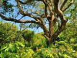 Národní park Sodwana Bay