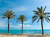 Palmy na pobřeží Malagy
