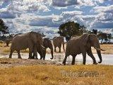 Sloni v národním parku Chobe