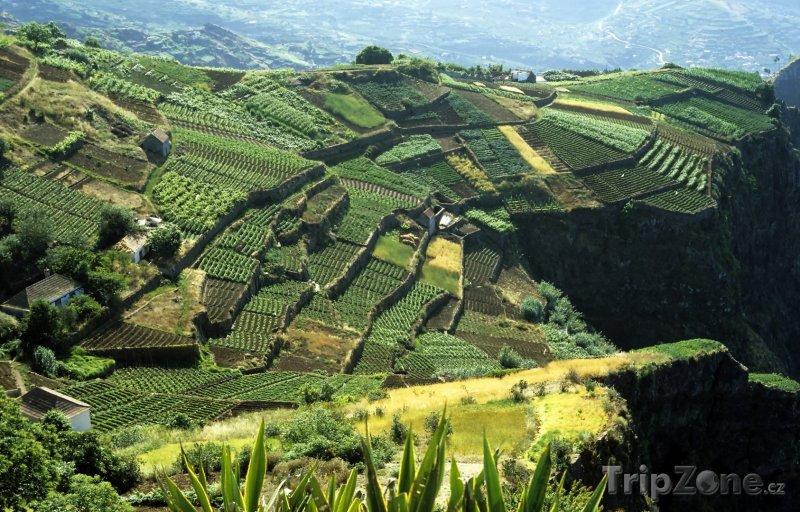 Fotka, Foto Terasová pole na ostrově Madeira (Madeira, Portugalsko)