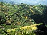 Terasová pole na ostrově Madeira